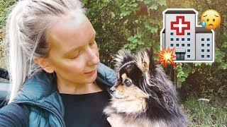LEAVING MY DOG AT THE VET | DOG VLOG 2018