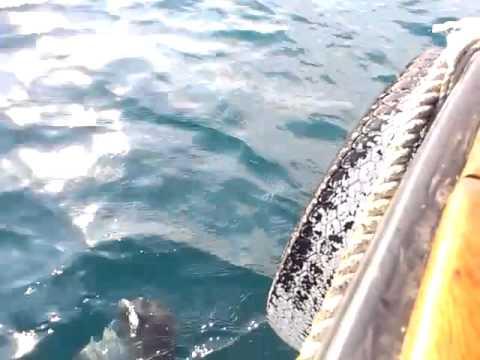 видео рыбалка в алуште