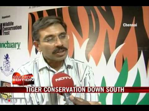 Tiger conservation down South