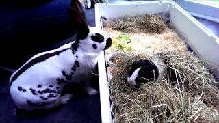How to make up a Guinea Pig house / living accomodation