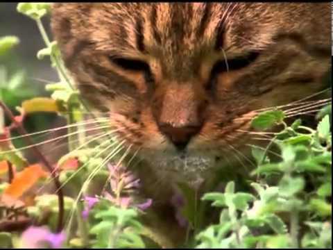 comportamiento extraño en gatos