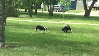 2 animals 1 ball