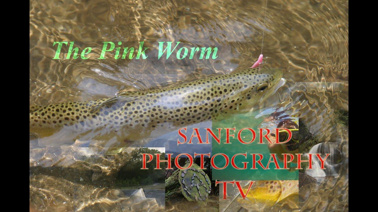 Berkley Power Worm For Trout Berkely Power Bait Trout Worm