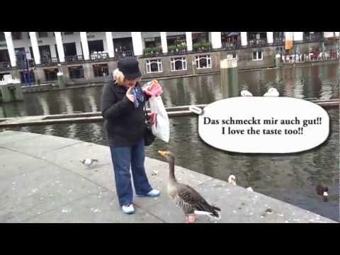 чертовски смешно!! бабушка разговаривает с утками!!