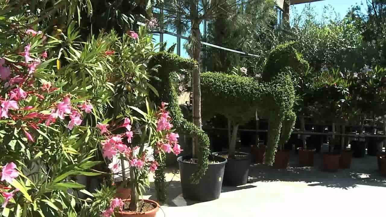 Les Jardins de Provence - Fleurs, plantes et équipement de ...