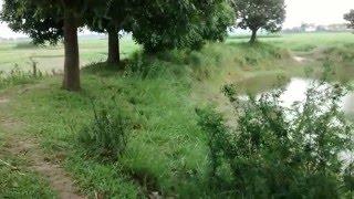 A bangladeshi village pond