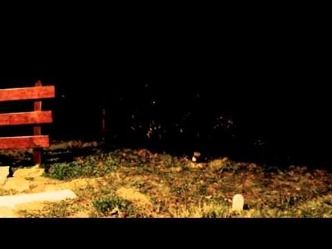 Macugnaga – Monte Rosa – Animali del bosco : Faina