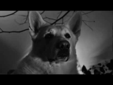 GOJIRA - L'Enfant Sauvage [OFFICIAL VIDEO]