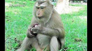 Cara Jade Daisy Romeo Bonita Elsa And Krabby Monkey Daily Life