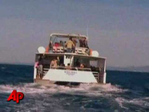 Raw Video: Rare Whale Spotted in Australia