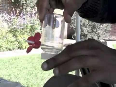 Como atraer colibríes : TIEMPODE.com