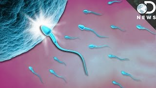 What Exactly Happens When Sperm Meets Egg?