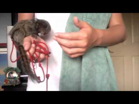how to take care of a pet monkey