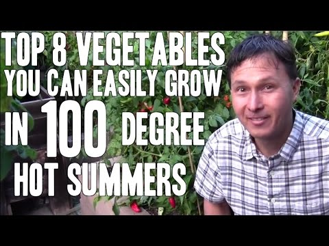 Top 8 Vegetables You Can Easily Grow in 100+ Degree Hot Summers