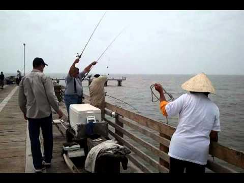 Galveston fishing videos for Galveston fishing pier report
