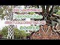 Lagu ലോകത്തിലെ അസാധാരണമായ മരങ്ങൾ  Unusual trees around the world  Malayalam  QNA