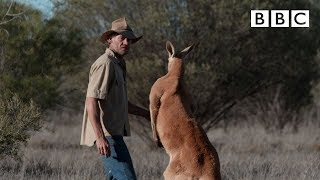 Brolga is chased by a Kangaroo - Kangaroo Dundee: Episode 6 Preview - BBC Two