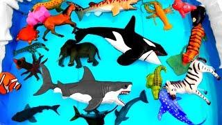 Wild Animals Learn Colors for Kids Safari Ocean Sea Animals