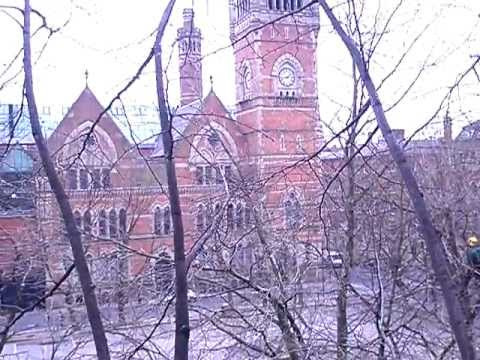 Manchester City Centre from tree tops by Cheshire Tree Surgeons