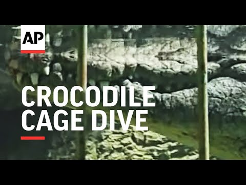 World's first Crocodile Cage Dive gives tourists a thrill