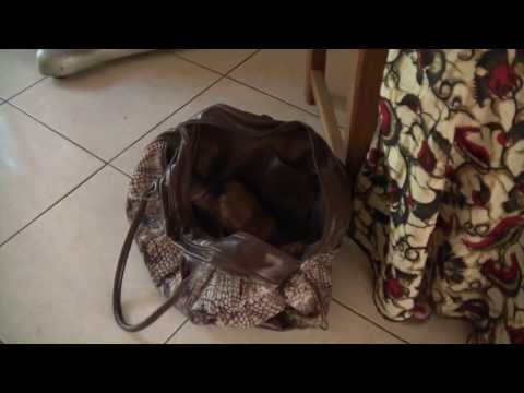 A bag full of Mangoworms (and a puppy), starring some Germans