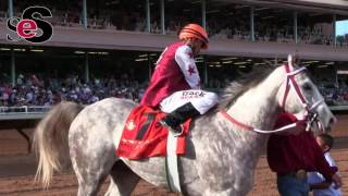 2016 All American Futurity(G1) Experience