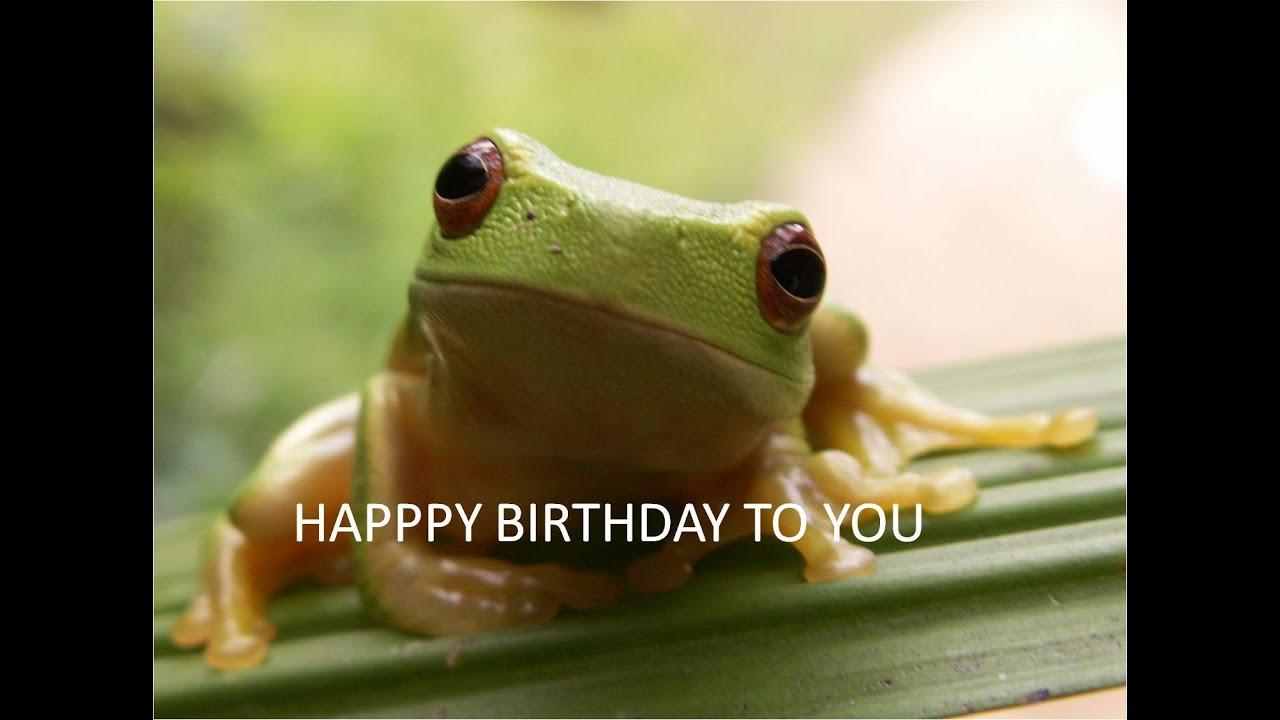 FUNNY FROG Singing Happy Birthday YouTube