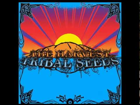Tribal Seeds- Warning http://www.tribalseeds.net/ Buy there album on iTunes now! http://itunes.apple.com/us/album/the-harvest/id318495844.