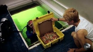 Scuba-Diving Pizza Delivery Man | World