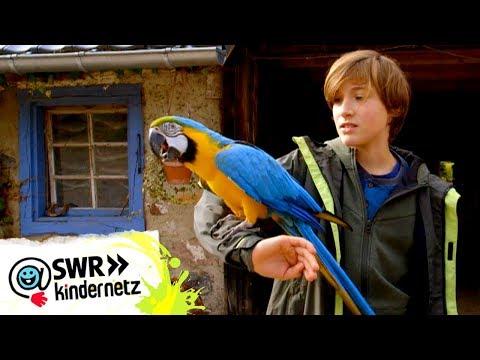 Ein Papagei auf dem Arm | Tiere bis unters Dach | SWR Kindernetz