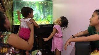 Vlog Unboxing Aquarium Buat Anak Anak -  Ikan Hias Kecil lucu dan Cantik