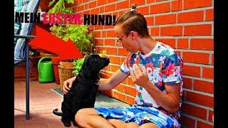MEIN ERSTER HUND! [Hunde Vlog 1] [Labrador Weplen]   Kuni