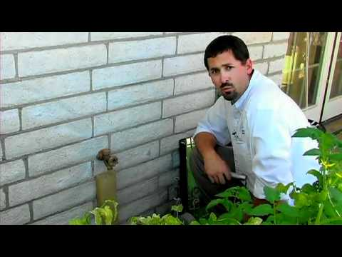 How to Get Rid of Flying Termites Get Rid of Termites Five