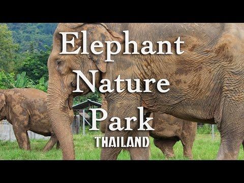 Elephant Nature Park Cambodia Reviews