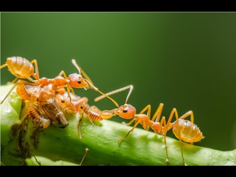 Amazing Facts About Ants