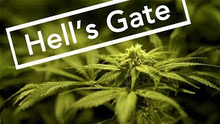 DARK WATERS OF CRIME: Hell's Gate (or when marijuana kills) - FULL EPISODE