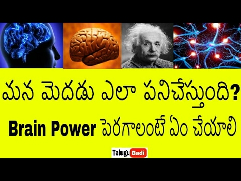 మన మెదడు ఎలా పనిచేస్తుందో తెలుసా | How the Human BRAIN Works in Telugu | Brain Power