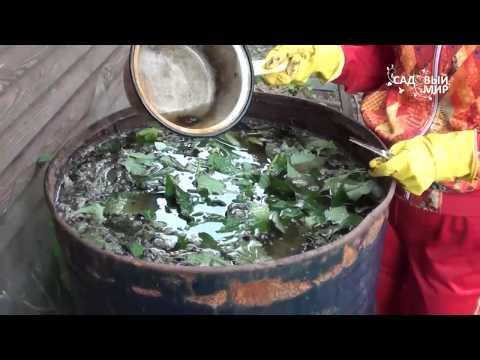 Приготовление настоев из растений для обработки овощей своими руками