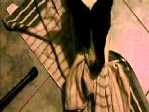 Chubbz Blanket Sex