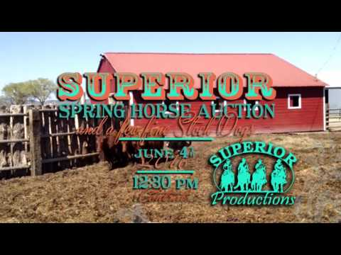 Superior Livestock Spring Horse and Stock Dog Auction Stock Dog Preview