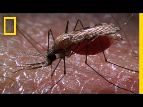 Lézeres szúnyogirtó
