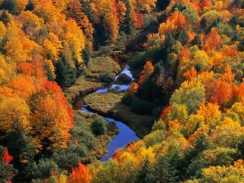 Жовтолиста осінь