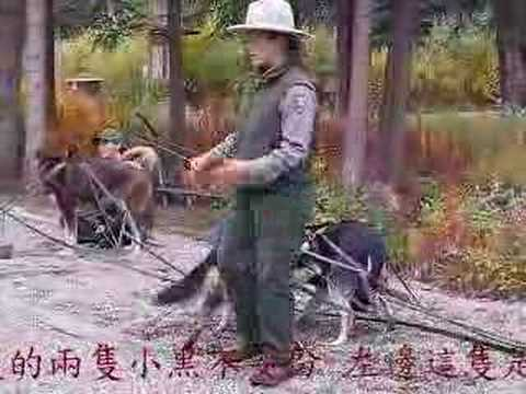 Sled Dog Demo