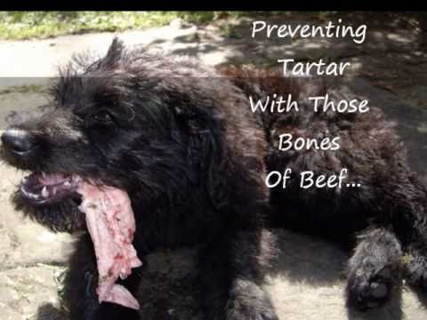 Real Dental Sticks For Dogs Raw Meaty Bones!