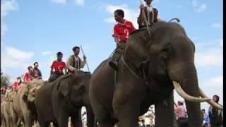 Chú voi con ở Bản Đôn -  nhạc thiếu nhi vui nhộn cho bé yêu