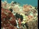 Veligandu - Diving (2)