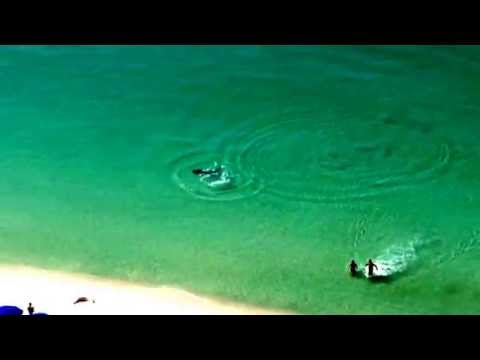 Destin Large Hammerhead Shark near miss! August 24th 2014