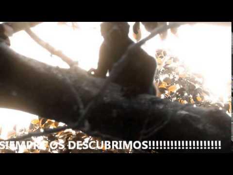 NO ME TOQUES LOS HUEVOS. MONOS CONGO DE TAMARINDO, COSTA RICA