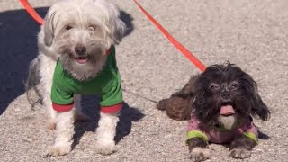 Dogs Found in Turpin Family