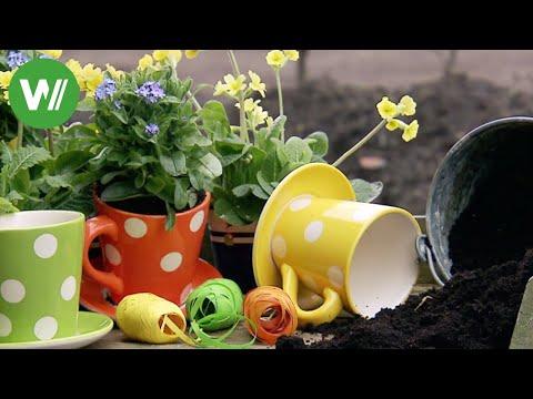 Blumen in Porzellantassen pflanzen | Deko-Tipp für Garten und Balkon